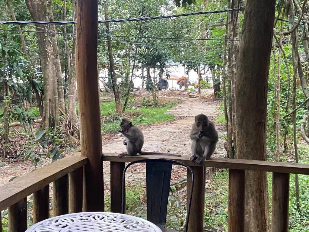 Budget Hotel Koh Rong - Beware of the monkeys!