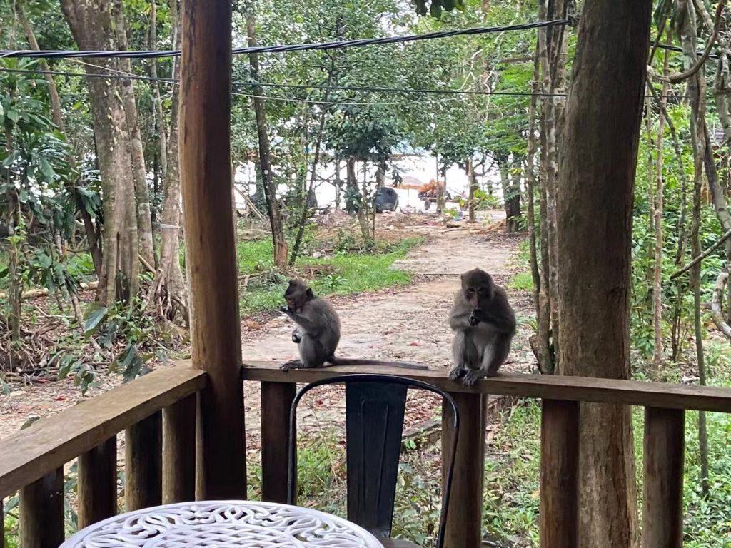 Monkeys in Koh Rong