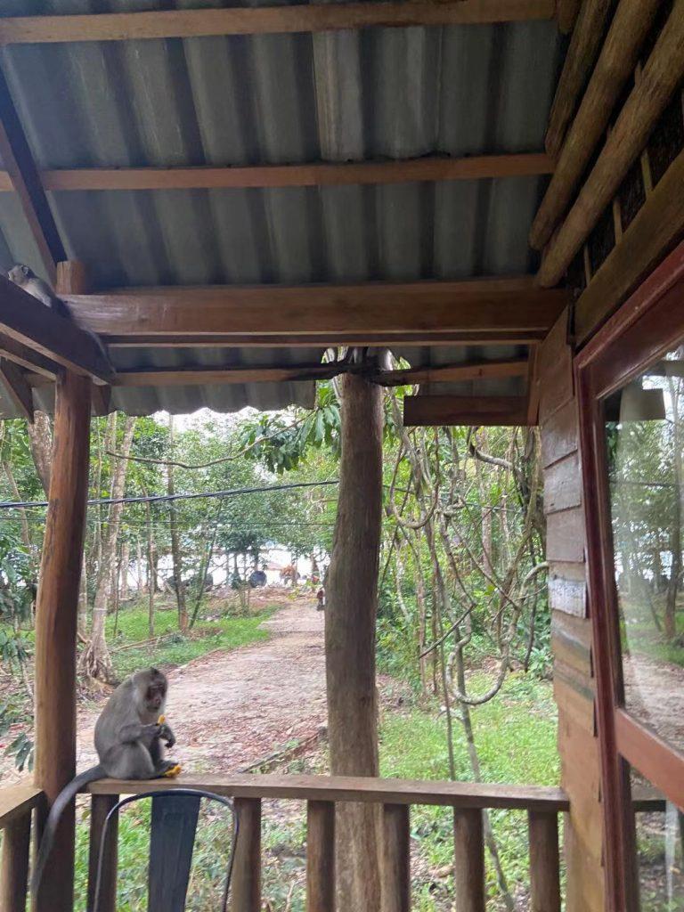 Monkeys on Koh Rong