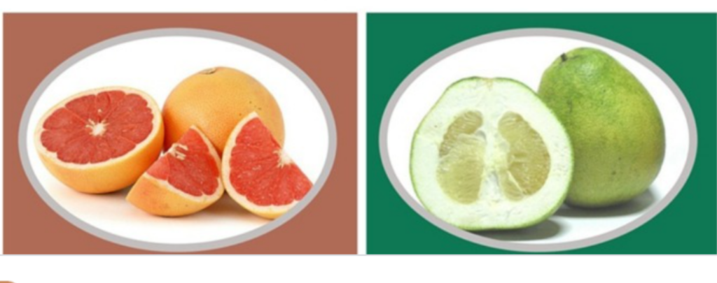 Grapfruite&Pomelo