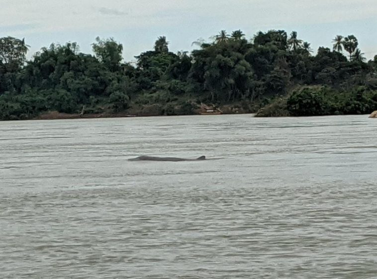 River Dolphin Kratie