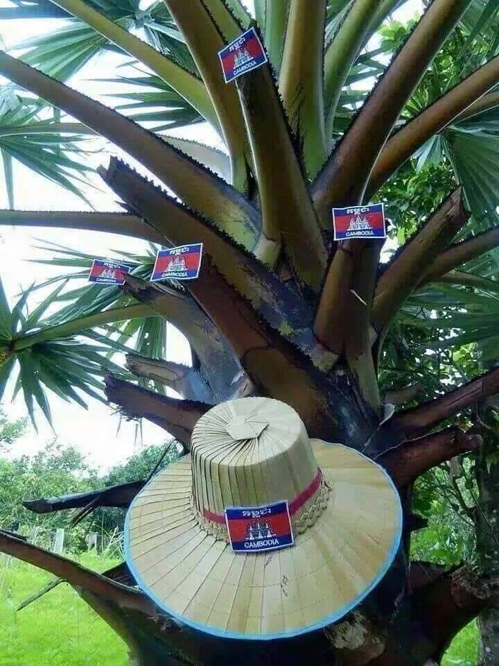 Cambodian Palm Tree
